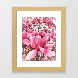 Mellow Magnolia Framed Art Print