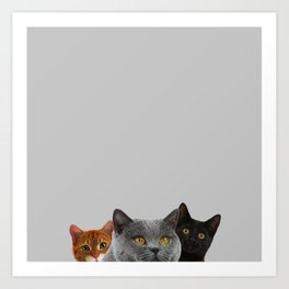 Grey Cat Print Animal Home Decor Pigeon Monochrome Cats Desin Art Print