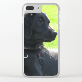 Black Lab at the Park Clear iPhone Case