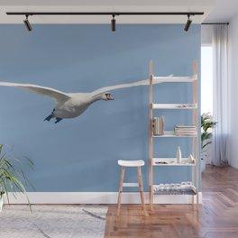 Mute Swan in flight blue sky (Cygnus olor) Wall Mural