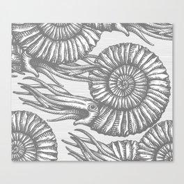 AMMONITE COLLECTION GRAY Canvas Print