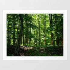 Pine tree woods Art Print