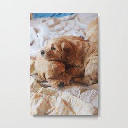 Puppy Nap Metal Print