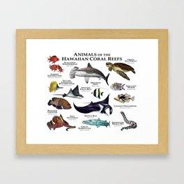 Animals of the Hawaiian Coral Reefs Framed Art Print