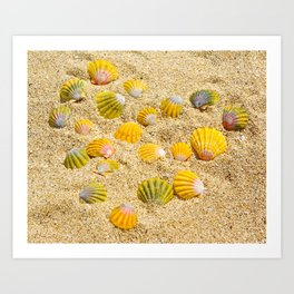 Sunrise Shells Art Print