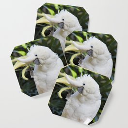 Sulfur-Crested Cockatoo Salutes the Photographer Coaster