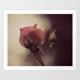 Garden Rose II Art Print