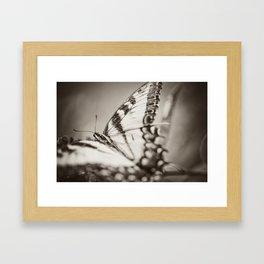 BW Swallowtail Framed Art Print