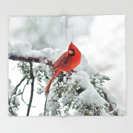 Cardinal on Snowy Branch #2 Throw Blanket
