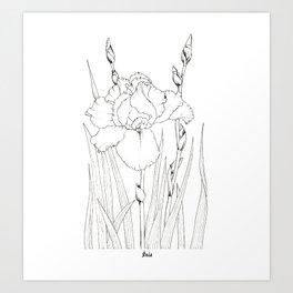 Black and white iris. Botanical illustration. Art Print