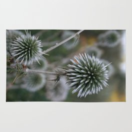 Macro Seed Head of Round Headed Garlic  Rug