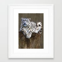snow leopard Framed Art Prints featuring  snow leopard by Doug McRae