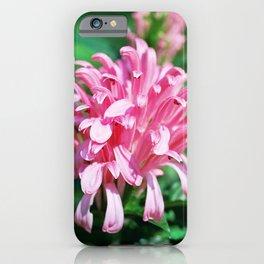 Brazilian Plume - Justicia carnea (Jacobinia carnea) iPhone Case