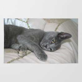 Grey Kitten Relaxed On A Bed  Rug