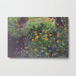 Spring in the Texas Hillcountry Metal Print