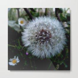 Dandelion 4 - Metal Print