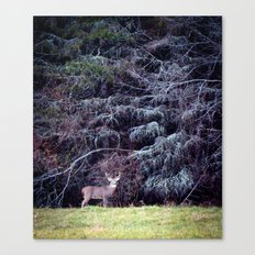9 Point Buck Canvas Print