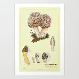 Morel Mushroom TRIPPY Collection Art Print