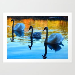 my three swans Art Print