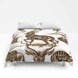 Ernst Haeckel Antilopina Antelope Comforters