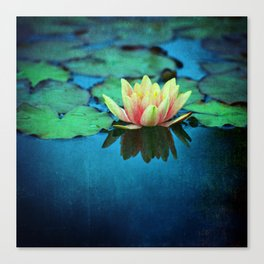 waterlily textures Canvas Print