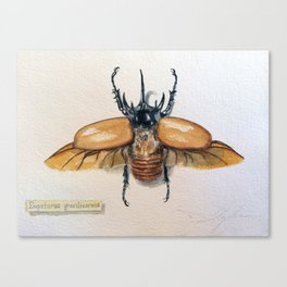 Eupatorus gracilicornis Canvas Print