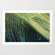 Wet leaf Art Print
