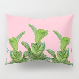 Rubber trees in group with pink Pillow Sham