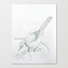 Cyanocitta cristata Canvas Print