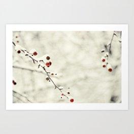 Winter White Art Print