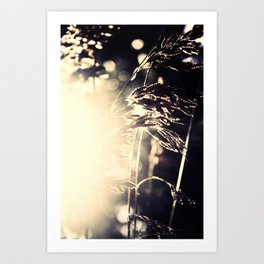 Gold in Black and White Art Print