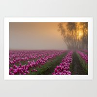 Pink Tulips Field at Skagit Valley In A Misty Morning Art Print