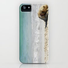 beach dog Slim Case iPhone (5, 5s)