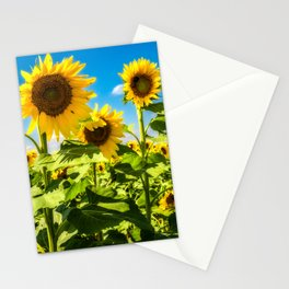 Three's Company - Trio of Sunflowers in Kansas Stationery Cards
