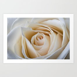 Creamy Rose Art Print