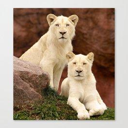White Lion Cubs - Observing. Canvas Print