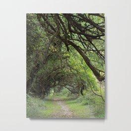 Wye Island Tree Tunnel | Eastern Shore, Maryland Metal Print