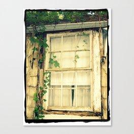 Window & Ivy Canvas Print
