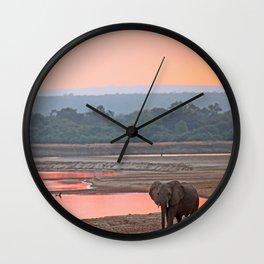 Walk in the evening light, Africa wildlife Wall Clock