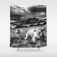 cows Shower Curtains featuring Resting Cows by David Pyatt