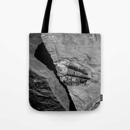 Utah - Trilobite Fossil Crack Tote Bag