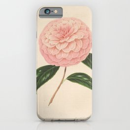 Flower camellia giardino schmitz5 iPhone Case
