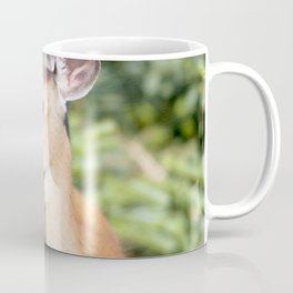 Watercolor Deer, Eastern Whitetail 02, Cape Breton, Canada, A Curious Look Coffee Mug