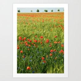 Field of Poppies Art Print