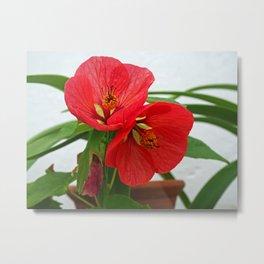 Abutilon Flowers Metal Print