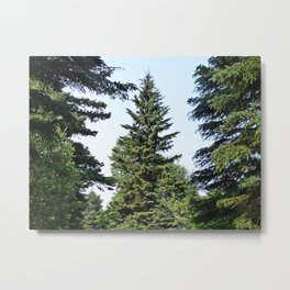 Evergreen Trees so Green Metal Print
