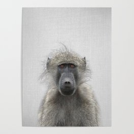 Baboon - Colorful Poster