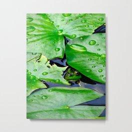 Peek  A Boo frog Metal Print