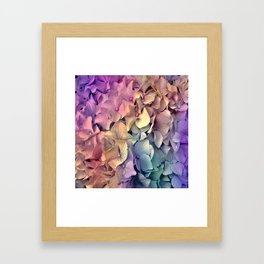 Soft Multi Color Hydrangea Framed Art Print