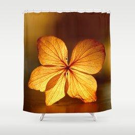 Fragile Hydrangea Flower Sunset Light Shower Curtain